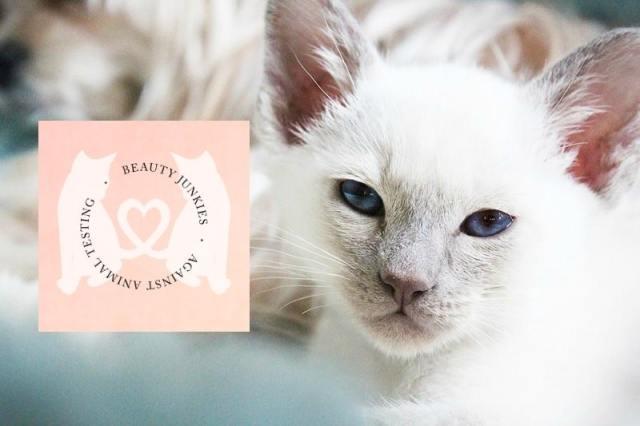 cruelty-free-kitty