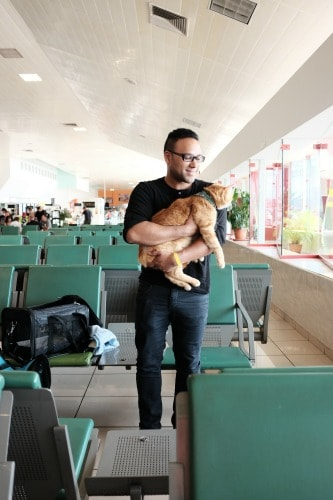 cat-at-airport