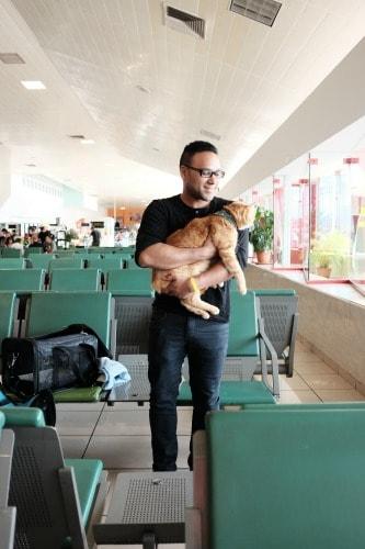 cat-at-airport