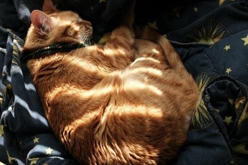 Lenny-sleeping