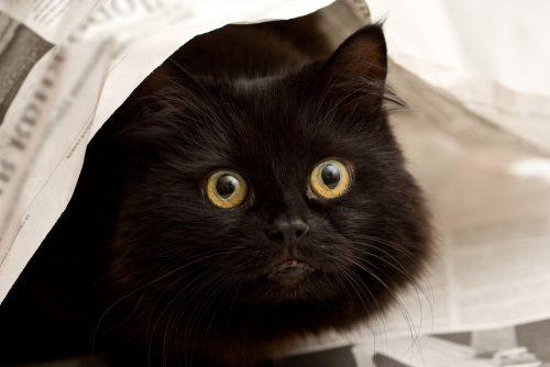 cat-newspaper