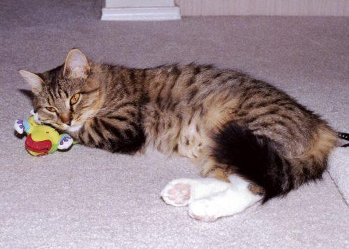 cat-sleeping-toys