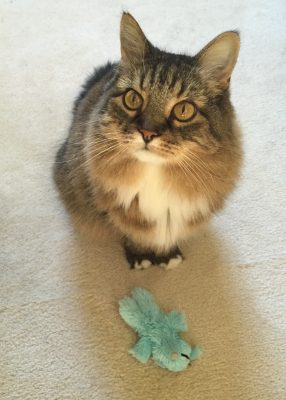 cat-with-toy