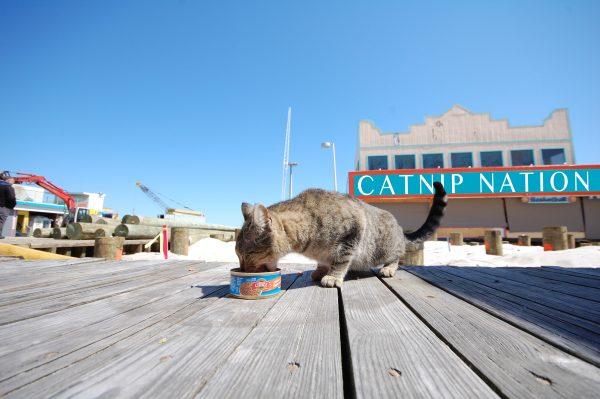 catnip-nation