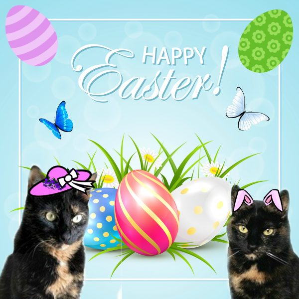 easter-cats