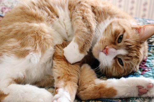 cat human food