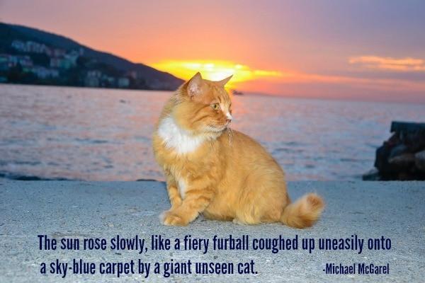 sunrise-cat