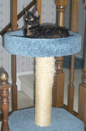 scratching-post-bed