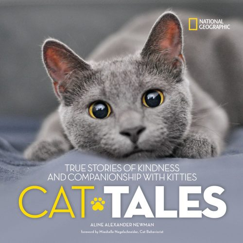 cat-tales-national-geographic