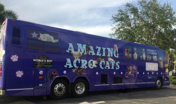 Amazing-acro-cats-bus