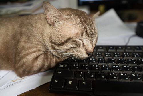 cat-keyboard