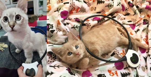 Assisi-Loop-paralyzed-kitten