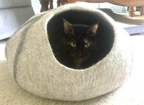 cat-cave