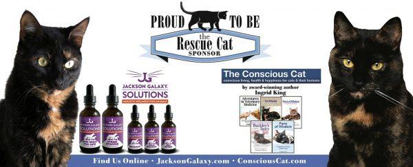 national-capital-cat-show-rescue-cat