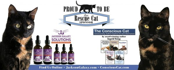 national-capital-cat-show-rescue-cat
