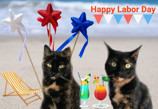 labor-day-cats-beach