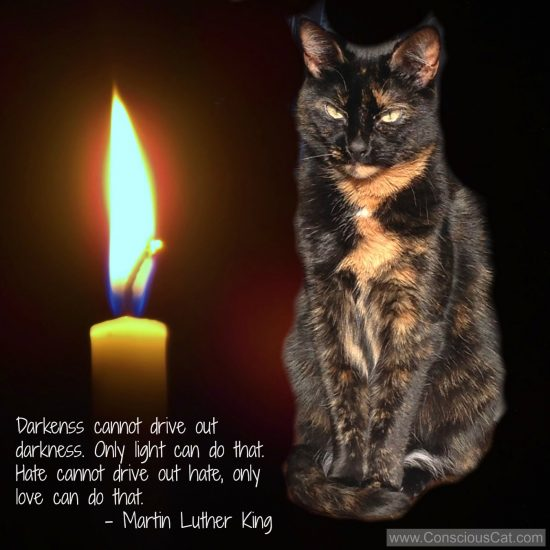 darkness-light-cat