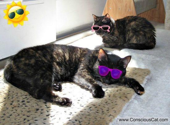 solar-eclipse-cats