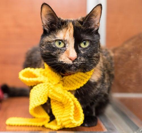 tortoiseshell-cat-knitted-scarf
