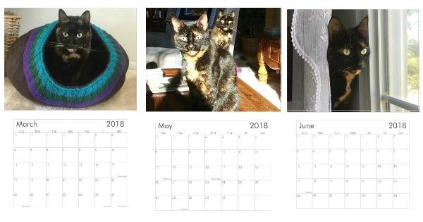 tortoiseshell-cat-calendar