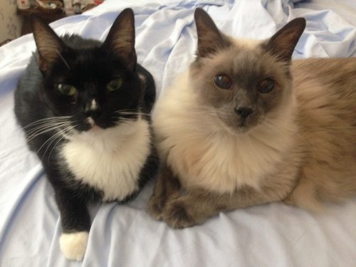 two-cats-on-bed