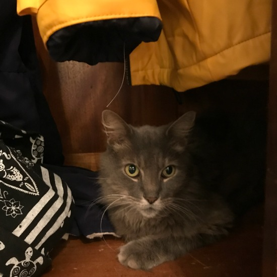 hurricane-irma-rescue-cat