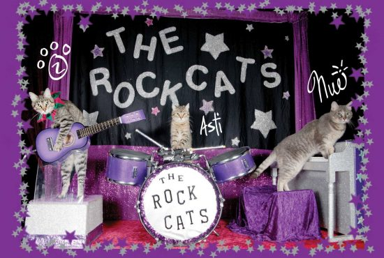 amazing-acro-cats-rock-cats