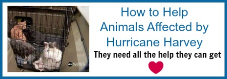 animal-rescue-harvey