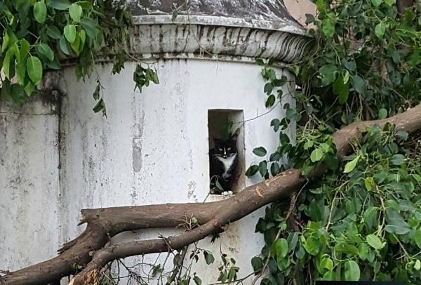 animal-rescue-puerto-rico-maria