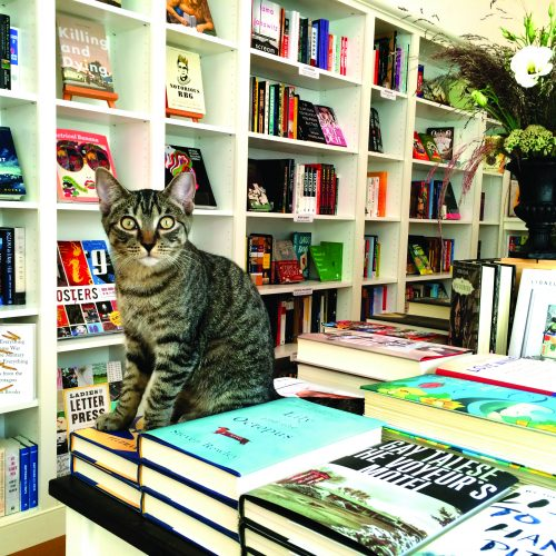 bookstore-cats