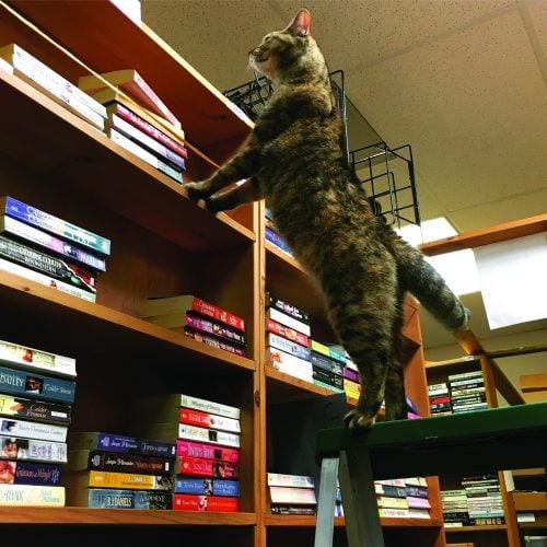 bookstore-cats