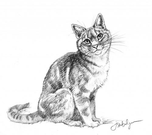 Review How To Draw Cats And Kittens A Complete Guide For Beginners The Conscious Cat
