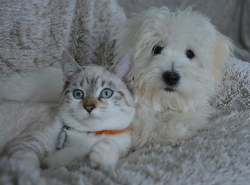 cat-and-dog-get-along