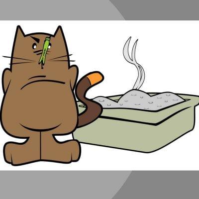 cat-litter-odor