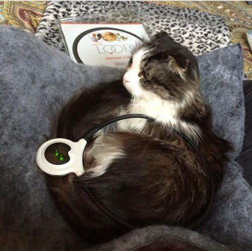 cat-assisi-loop-pain-relief
