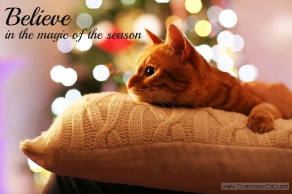 magic-of-the-season