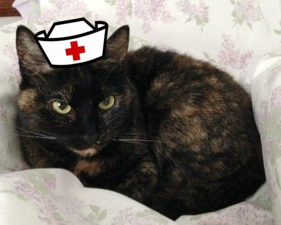 cat-nurse