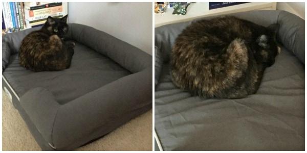 PetFusion-cat-bed