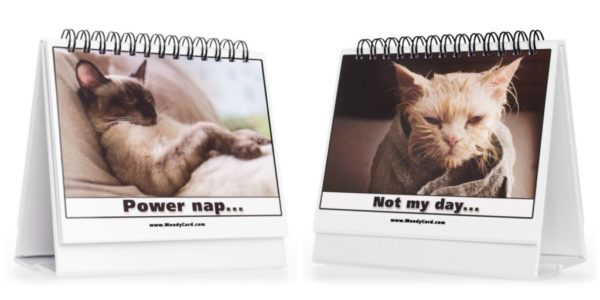 Moodycards-cat-cards