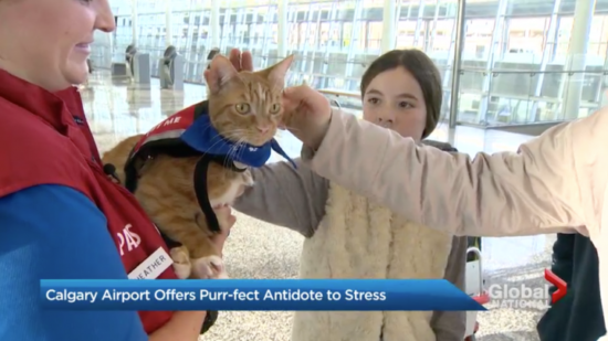 calgary-airport-therapy-cat