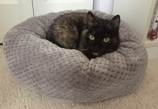 jackson-galaxy-donut-cat-bed