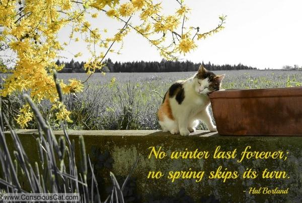 cat-forsythia-spring