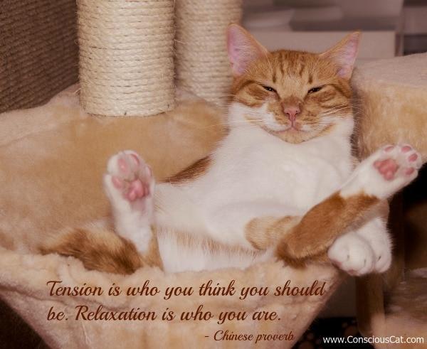 cat-relaxing