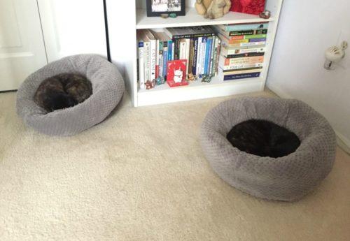 donut-cat-beds