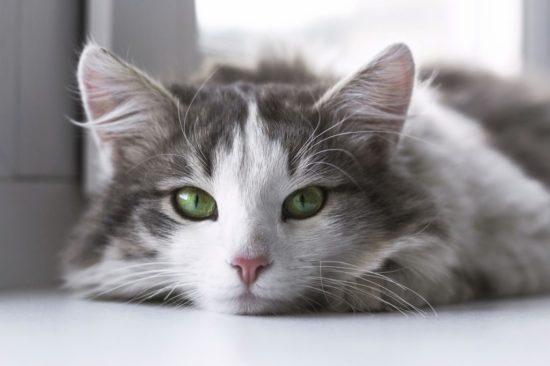 cat-eye-color