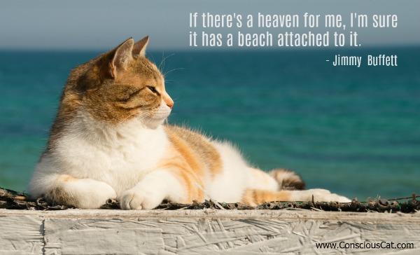 beach-cat