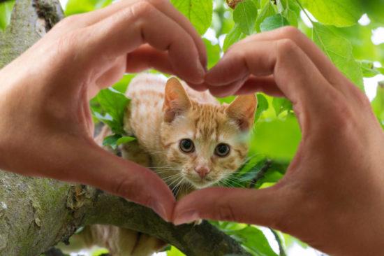 kitten-tree