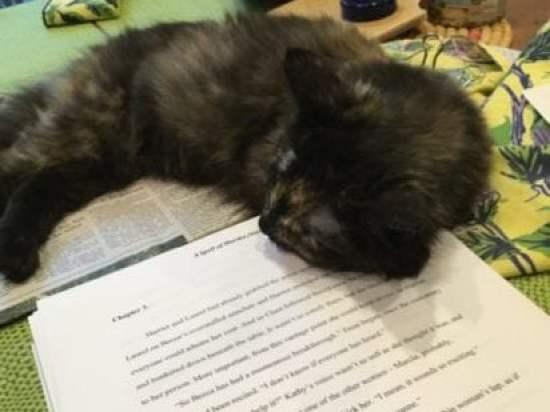cat-manuscript