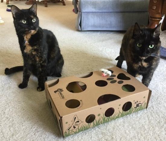 cat-amazing-puzzle