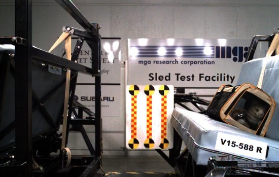 crash-testing-pets